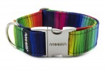 Collar Rainbow lines with metal buckle