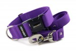 Collar Fuchsia Violet with a leash