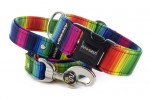 Collar Rainbow lines with a leash